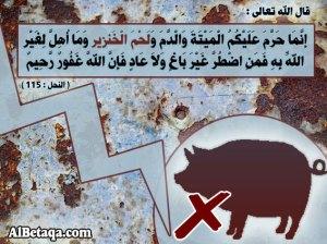 خطورة لحم الخنزير على الإنسان .. جعل الخالق سبحانه يحرمه على المؤمنين .. حتى يعلم أهل الأرض كلهم ما يحبه الله لعبادة الصالحين